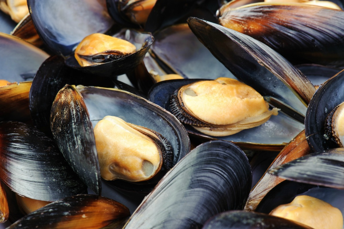 Mussels are a Belgian and Dutch delicacy