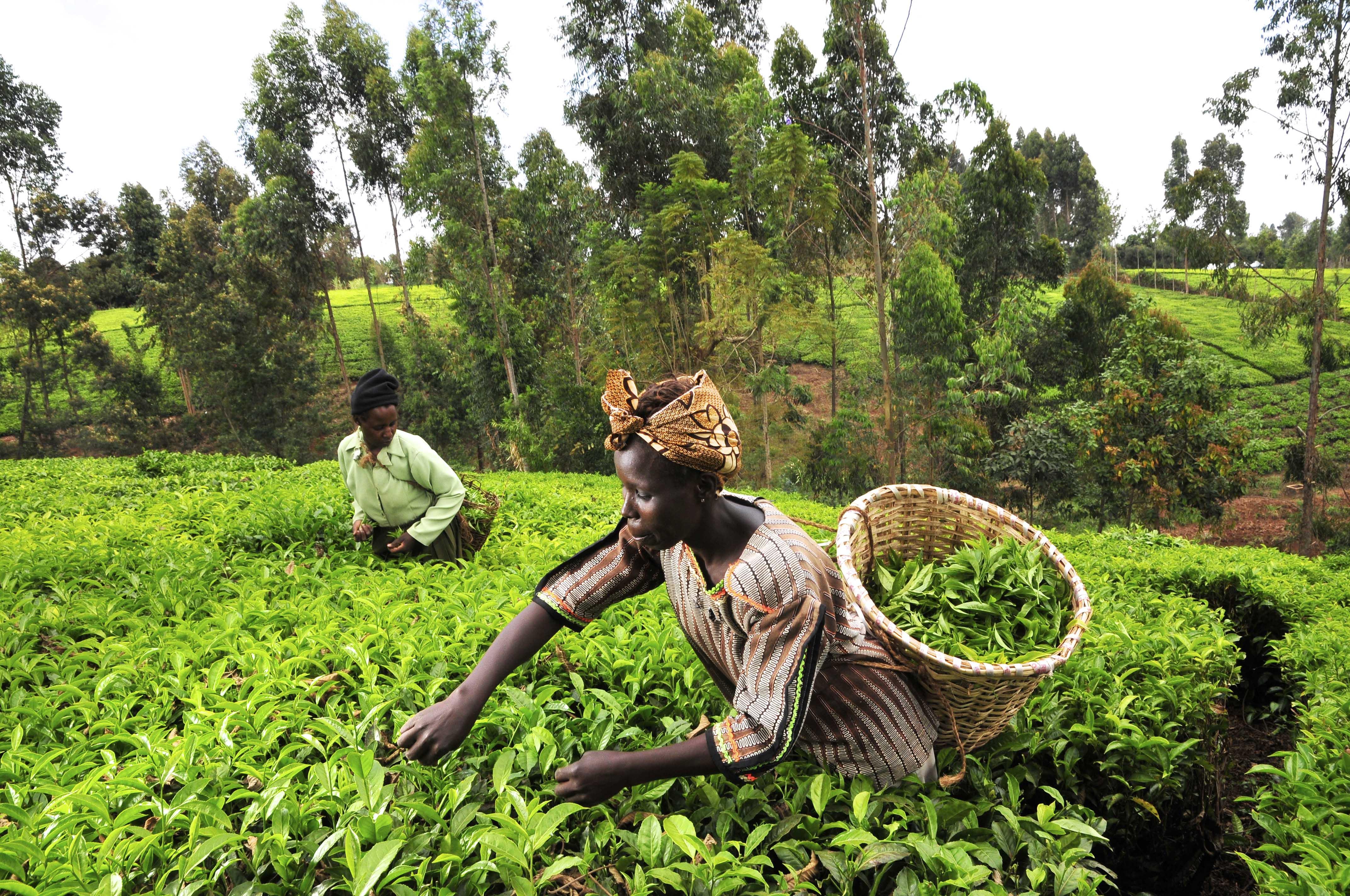 """Résultat de recherche d'images pour """"south africa, agriculture, innovations, industries, south african agriculture"""""""
