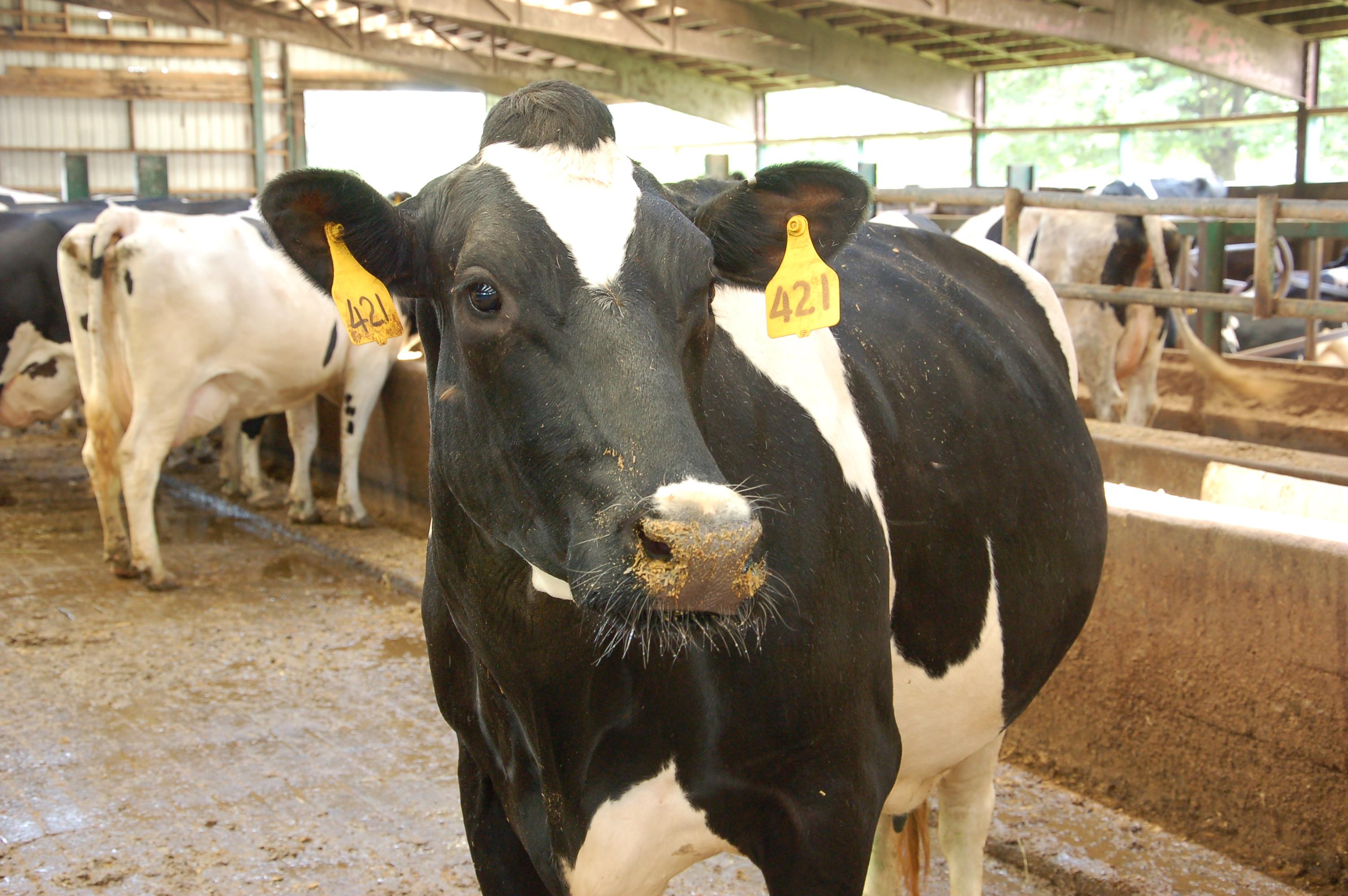 dairy farming business plan pdf in hindi