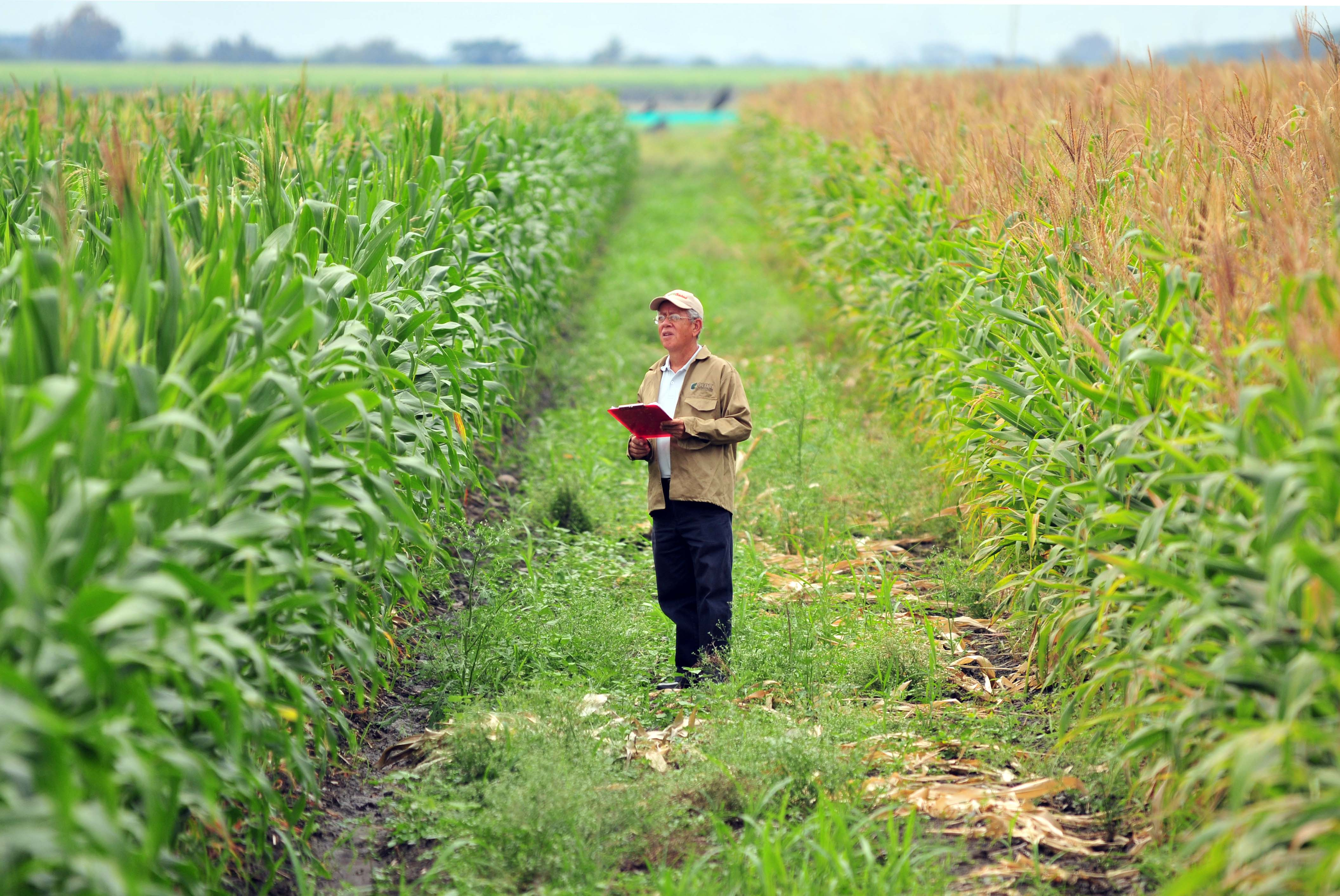 the issues of the gmo in the food industry of the united states of america Economic issues surrounding genetically modified foods  a united states seed harvester for  than for genetically modified (gm) food that has been engineered.