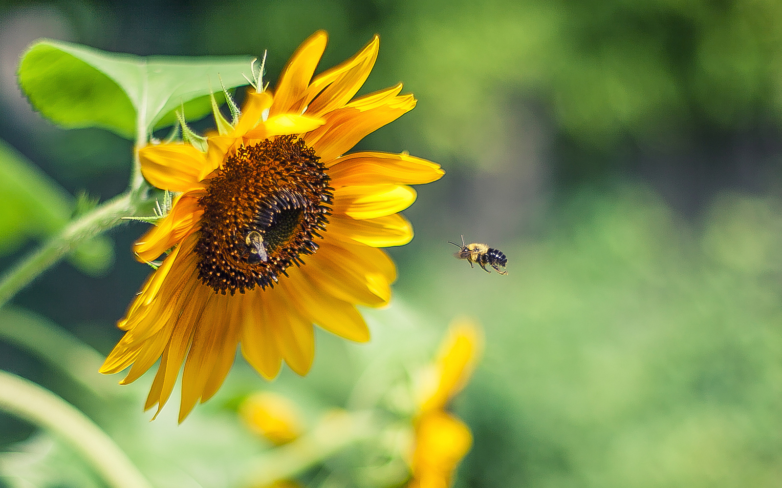 a study of the importance of bees The benefits of studying bees by marla spivak,  field of study: entomology — bees  bees are the most important insect pollinators of many fruits, vegetables, nuts and flowers.